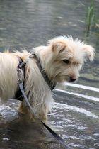 Mia - ehemaliger Straßenhund