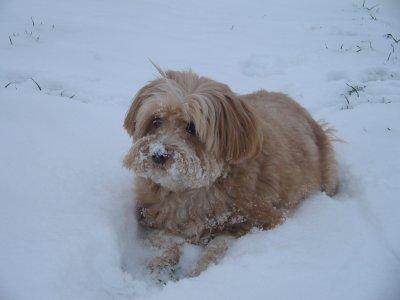 miam !!! c'est bon la neige...