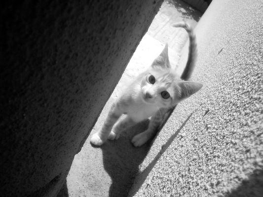 Miaou!!!