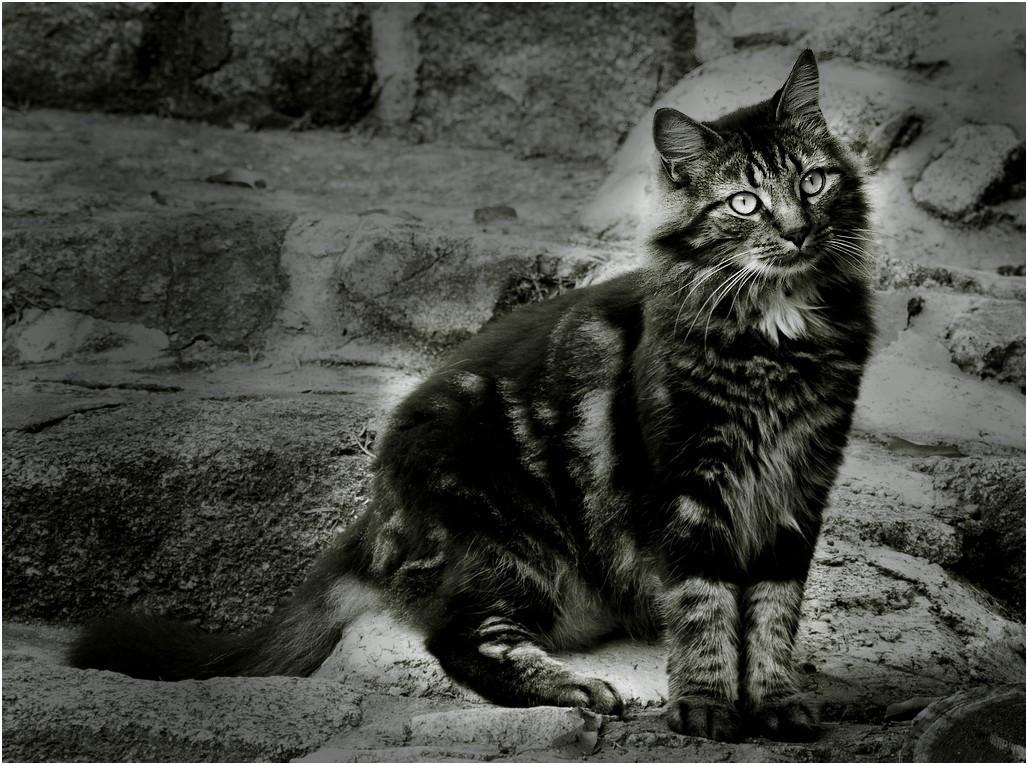 Miaou en octobre