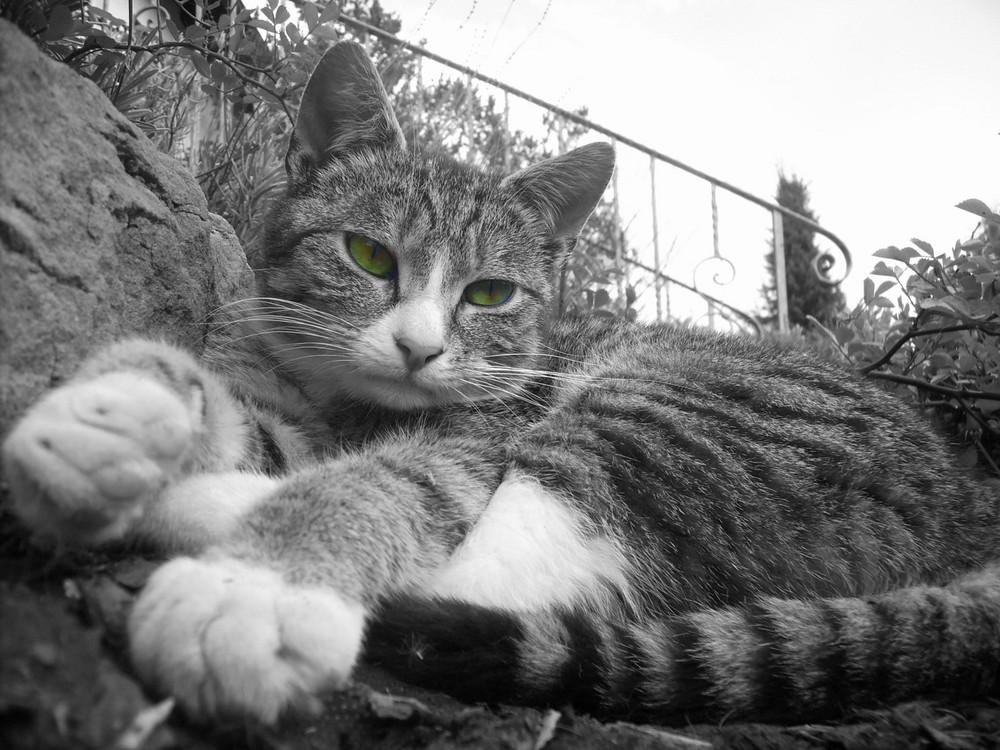 Miau =)