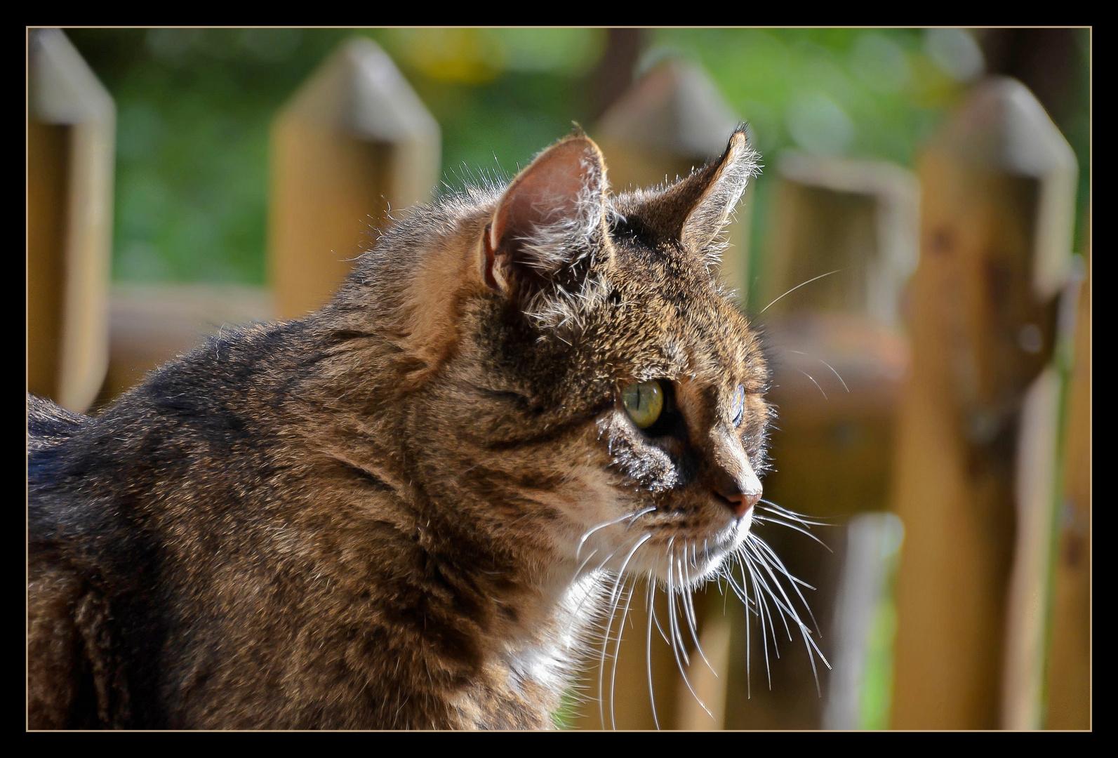 Miau (die Erste)