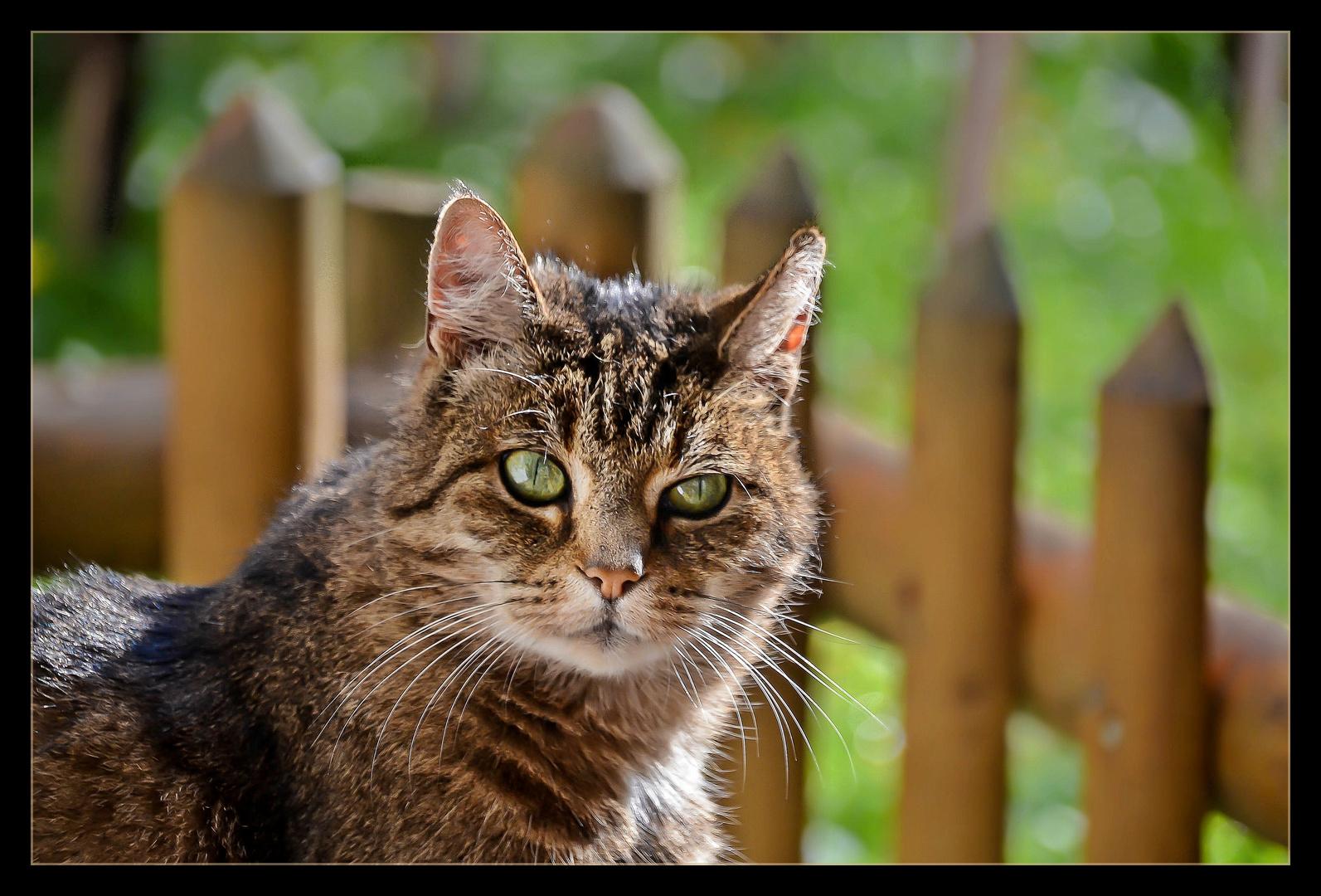 Miau (die Zweite)