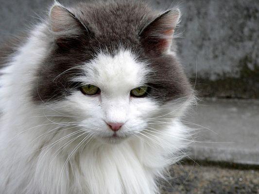 Miau...(I)