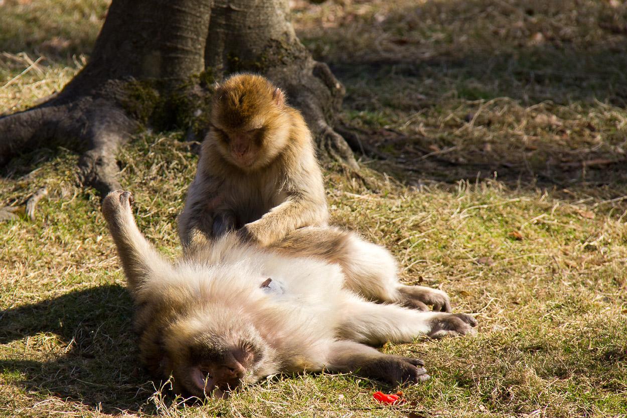 """Mich laust der Affe"""