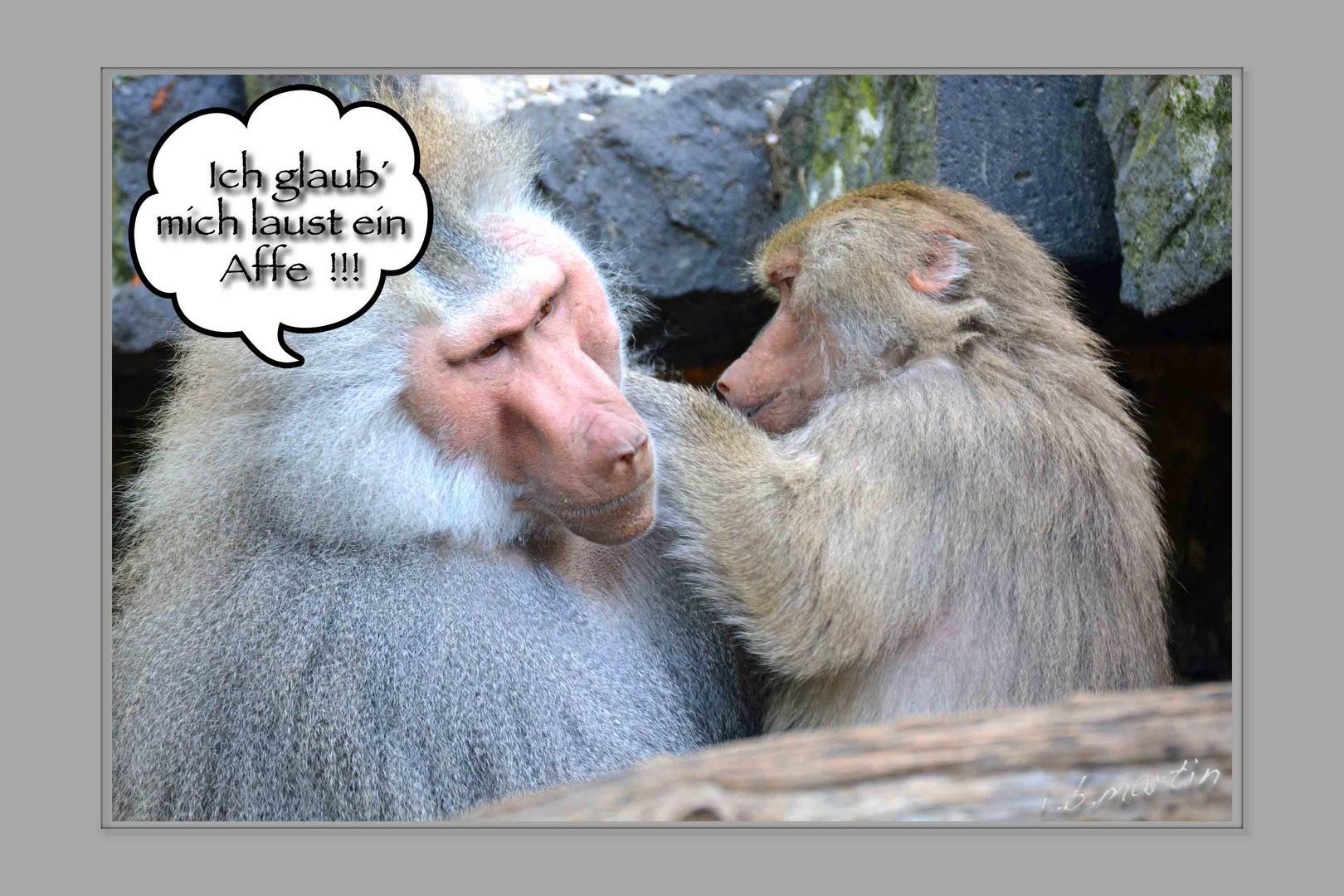 mich laust ein Affe