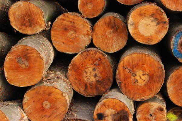 Micky im Holzstapel 2