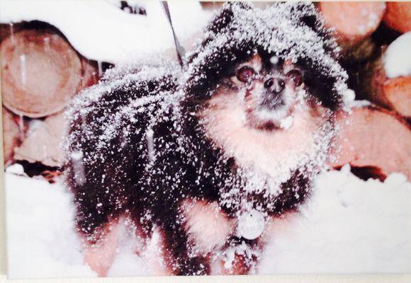 Micky im Schnee