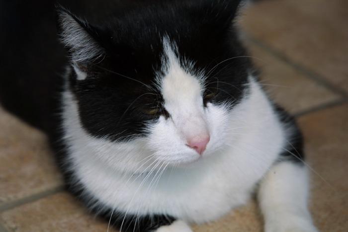 Mietze-Katze