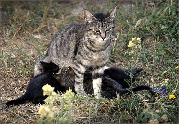 Mietzen-Mutter