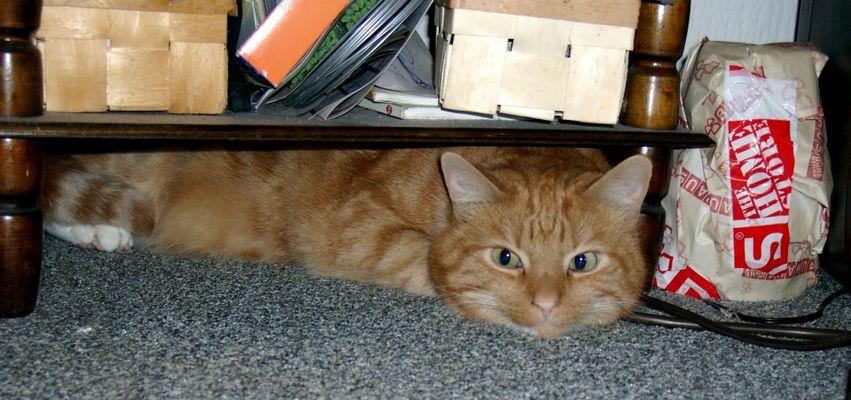 Miezekatze unterm Tisch