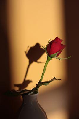 Mignonne, allons voir si la rose