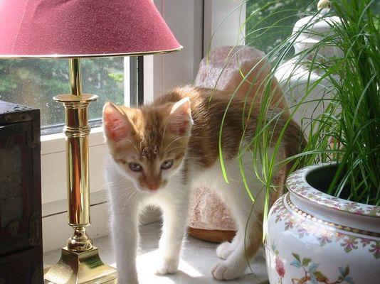 Mika neugierig