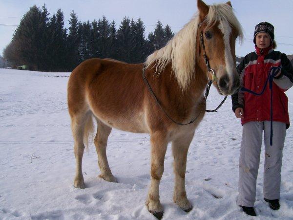 Mikado im Schnee