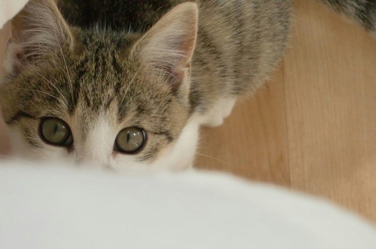 Mika's eyes