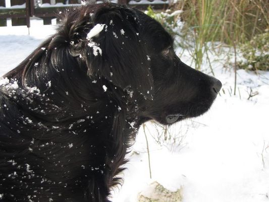 Mila plus Schnee