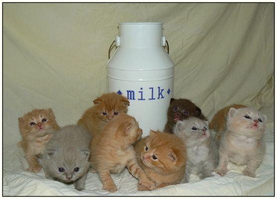 Milch & Kitten