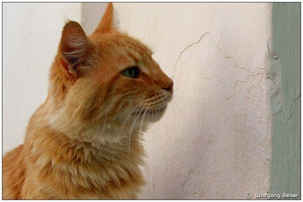 Miliotische Katzensilhouette