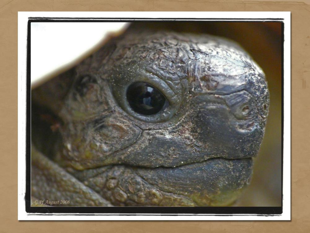 milka, portrait einer kleinen schildkröte