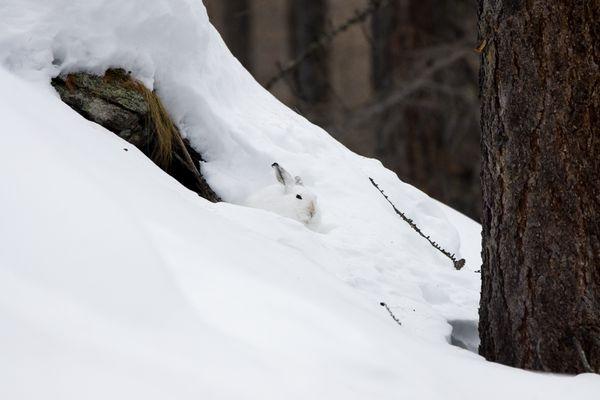 Mimetismi invernali