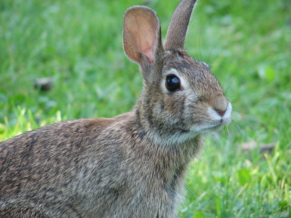 Mimi my wild rabbit