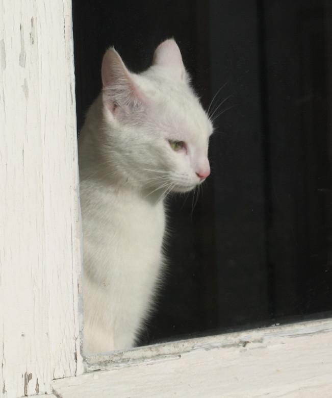 Mimi surveille
