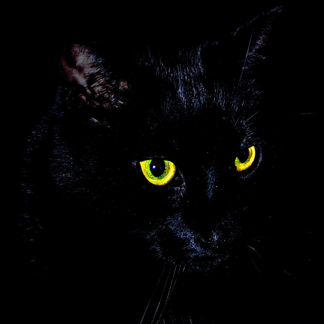 Mimpie, schwarz wie die Nacht - Tieger of nights