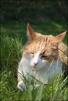 Min katt Suddi {meinen katzen Suddi}