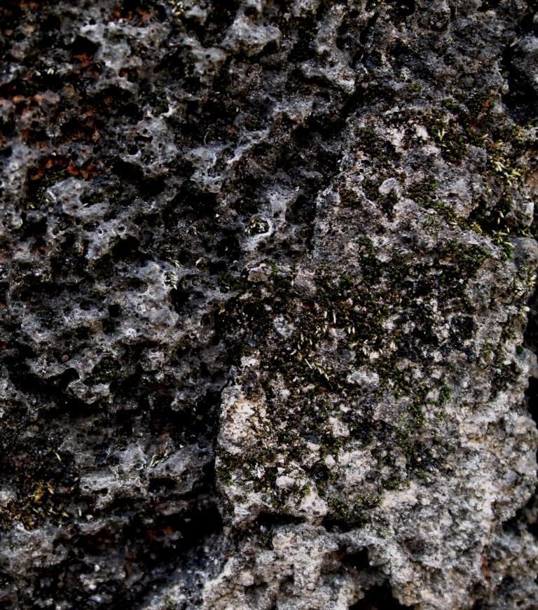 Mineral y vegetal