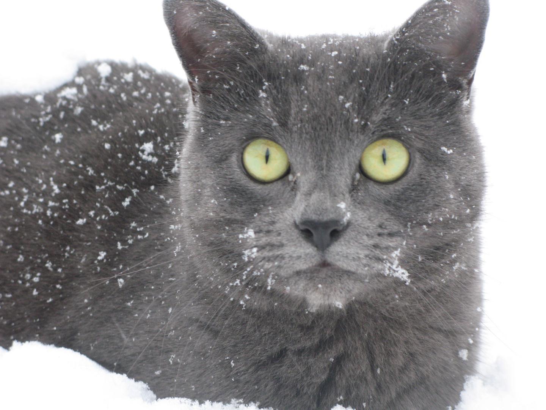 Minette des neiges