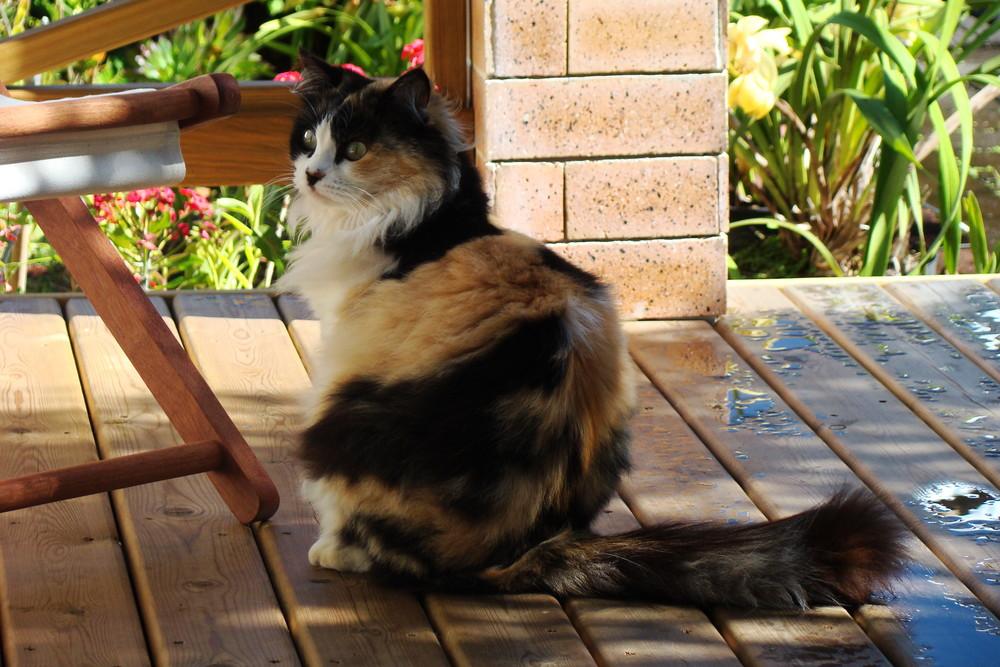 Minette prend l'air sur le terrasse...