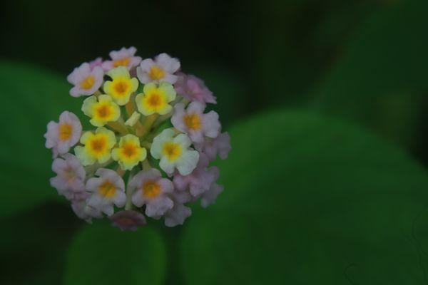 mini big bang floral