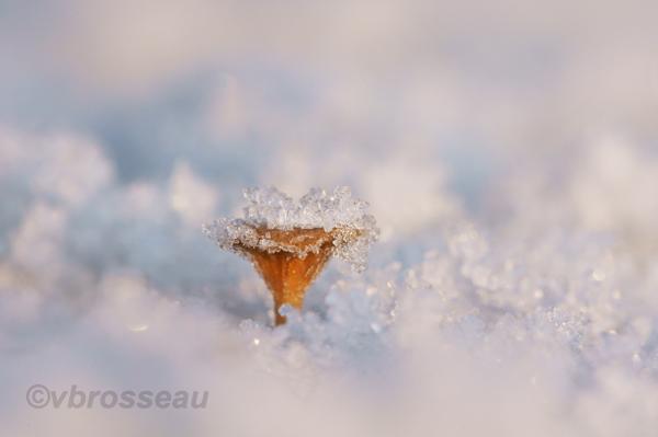 mini champignon de la mousse