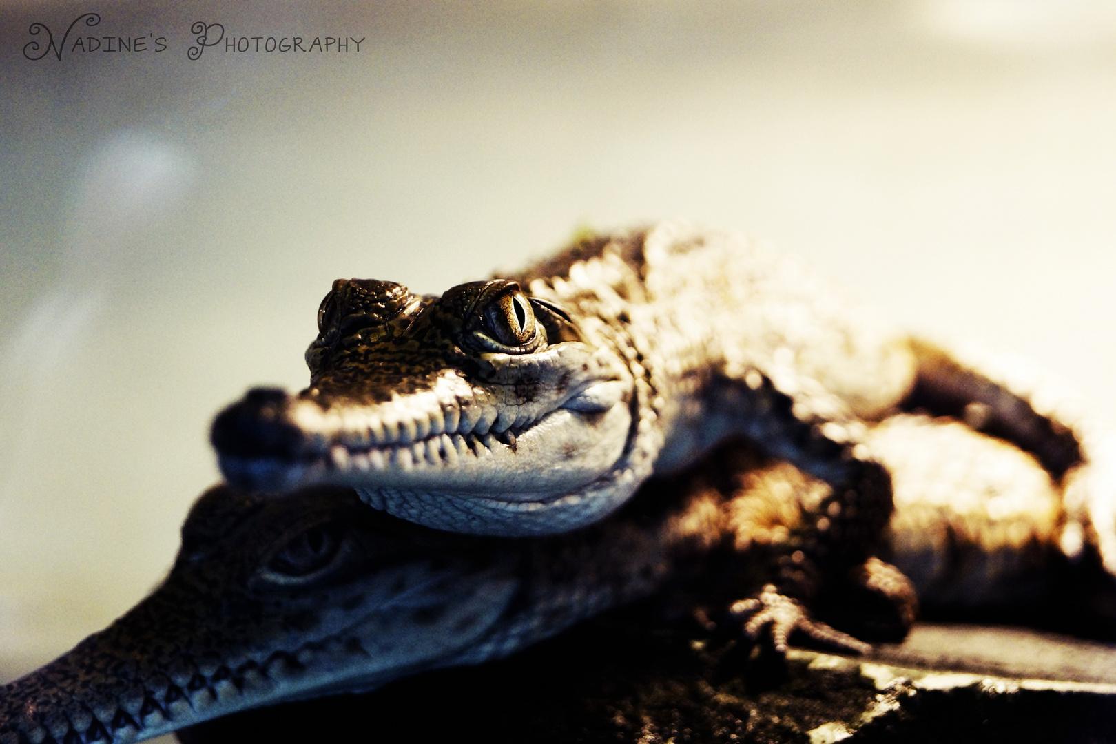 Mini Crocos. :)