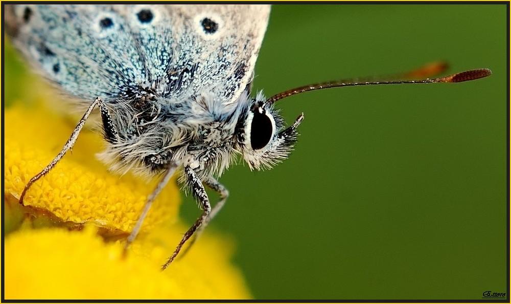 Mini farfallina con antenna satellitare