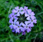Mini florcita I