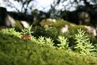 Mini forêt