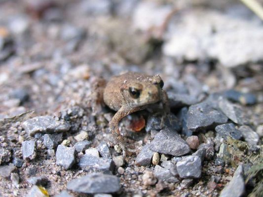 Mini-Frosch ganz groß (Makrofunktion)