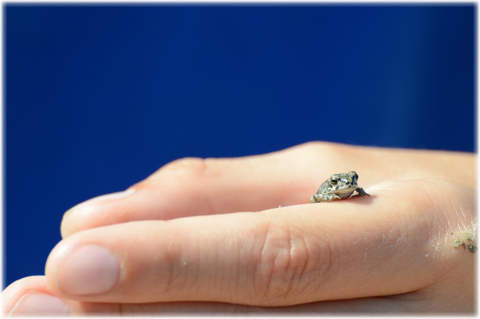 Mini Kröte