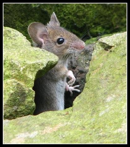Mini petite souris