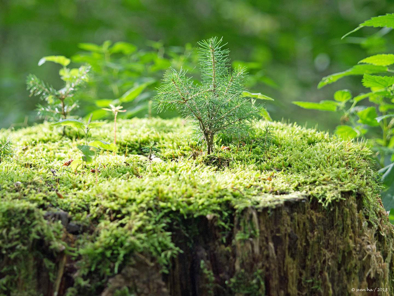 Mini-Wald im Wald
