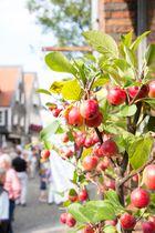 Miniäpfel