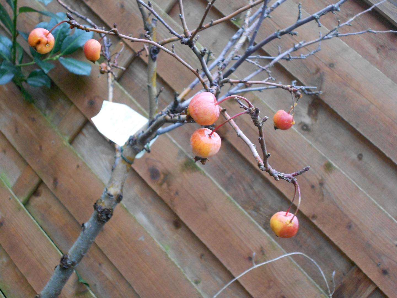 Miniäpfelchen