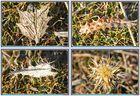 Miniaturas de la Naturaleza (Macros) I