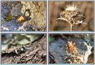 Miniaturas de la Naturaleza (Macros) II