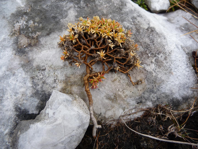 Miniaturbäumchen