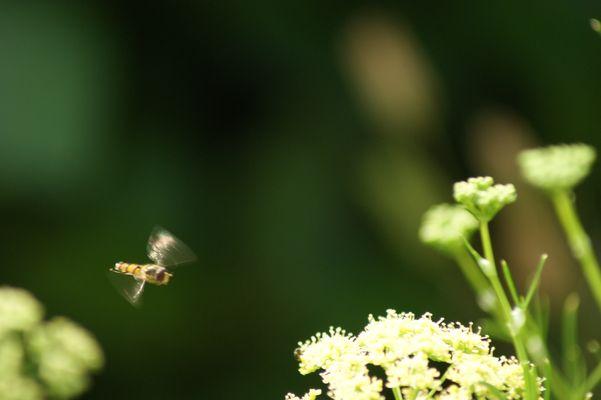 Miniature volante
