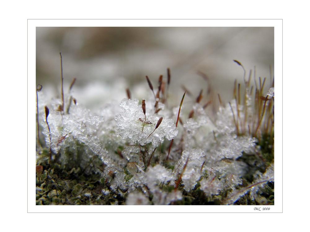 Miniatur~Eiswelten I