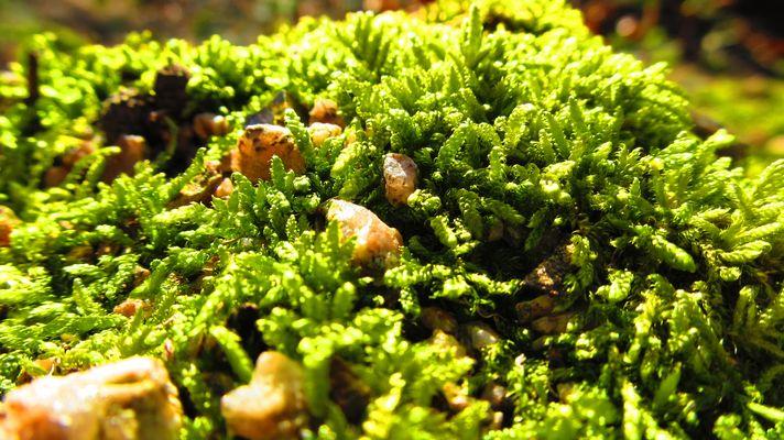 Miniaturlandschaft - Makro vom Waldboden