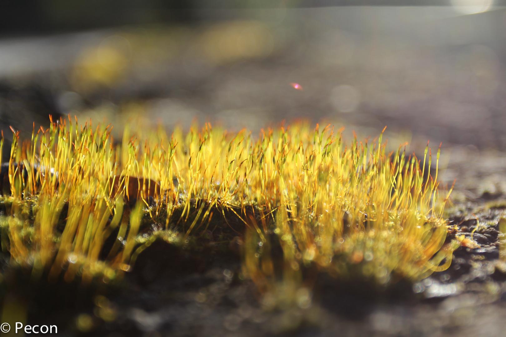Miniaturwelten II